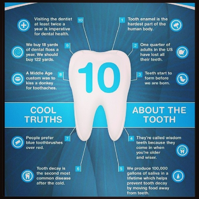 tooth truths